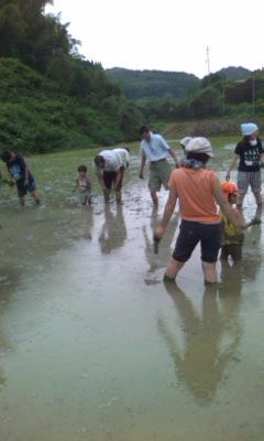 泥んこ田植え